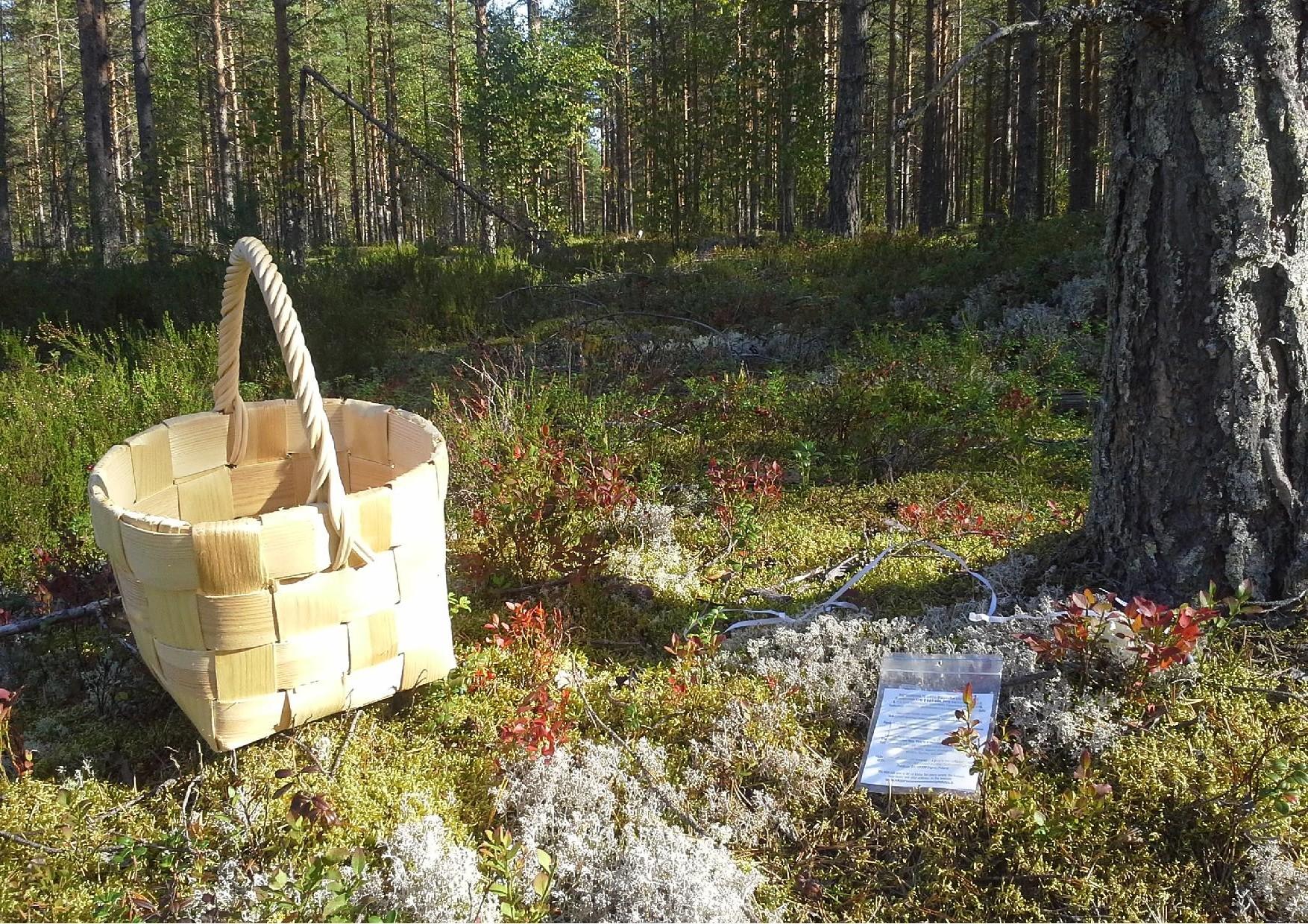 Sanna Laakkonen löysi ensimmäisen rauhanviesti ilmapallon 5.9.2014 klo 10.40.