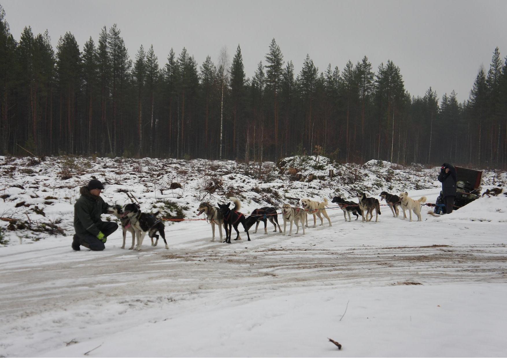Eräopas Panu Sipilä pistäytyi Jukolan Motissa valjakkonsa kanssa. Todella vaikuttava näky.