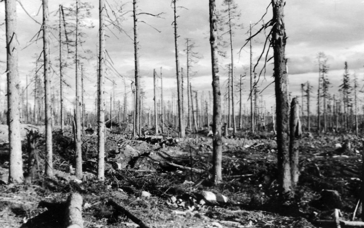 Tukikohta Pallon maastoa rauhantekopäivänä 5.9.1944. Kuvasta näkyy hyvin miten valtava tykistötuli on myllertänyt maaston ja katkonut lähes kaikki alueen puut.